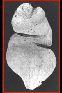 gambar ilustrasi semen