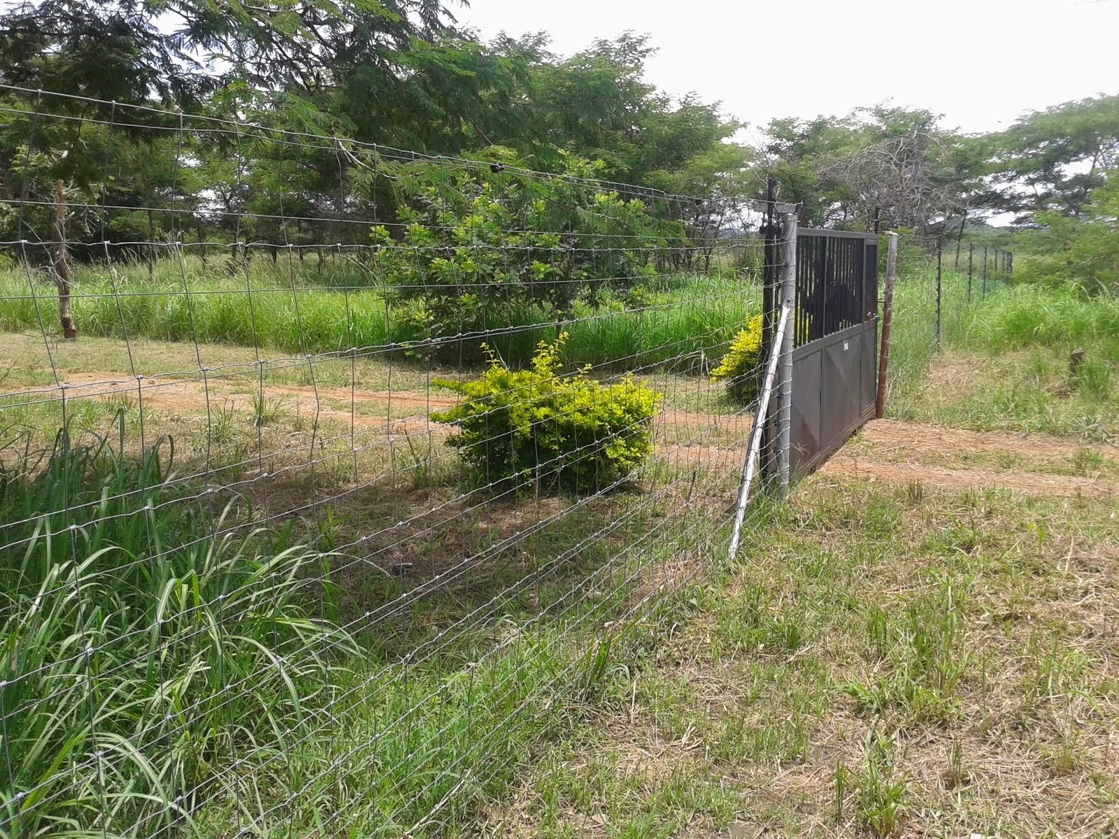 FARMS FOR SALE IN CHILANGA