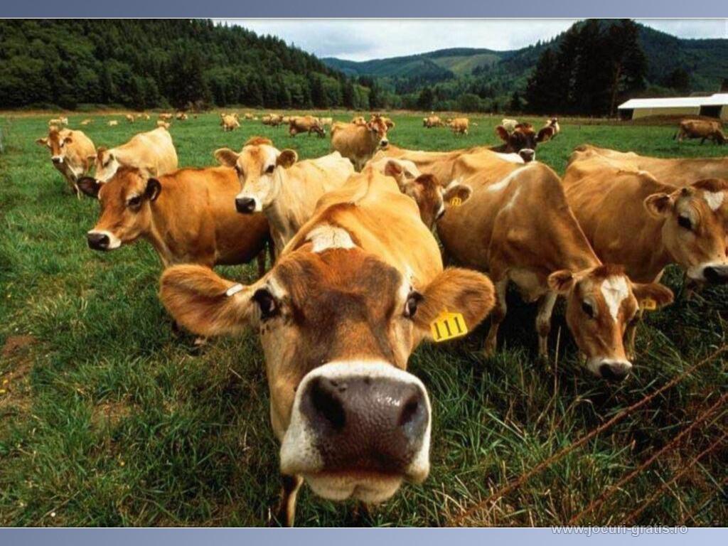 http://4.bp.blogspot.com/-S5I2cwAiLiQ/TtxJCURQ25I/AAAAAAAAAkE/Mx_eVCBaJG4/s1600/farm-wallpaper-14-764993.jpg