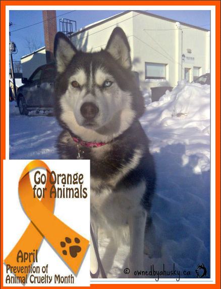 support prevention of cruelty to animals month