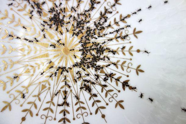 Loiça com formigas - Evelyn Bracklow