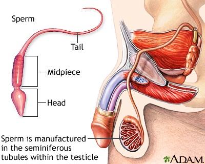 liebesschaukel test sperma gegen halsweh studie