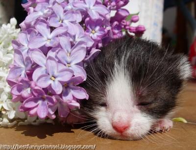 Cute sleeping kitty.