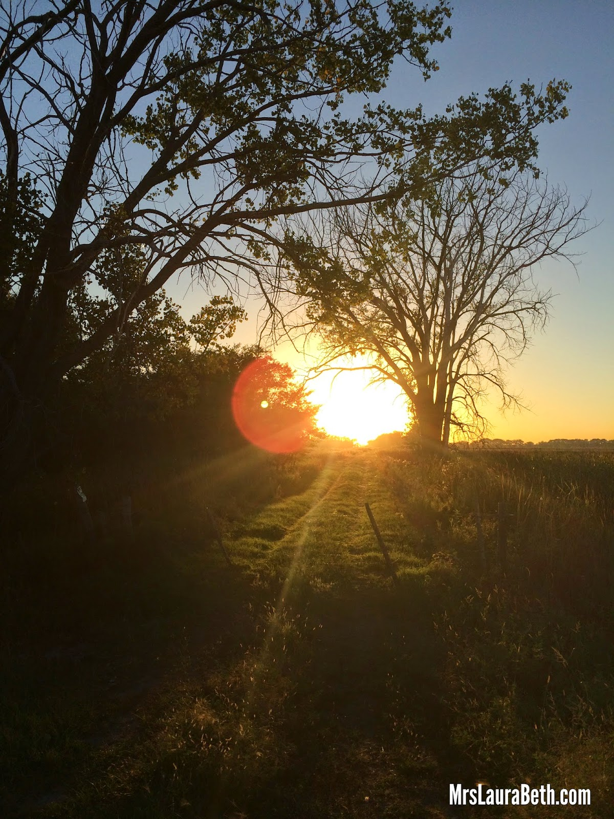 country sunset; farm life; rural; lens flare