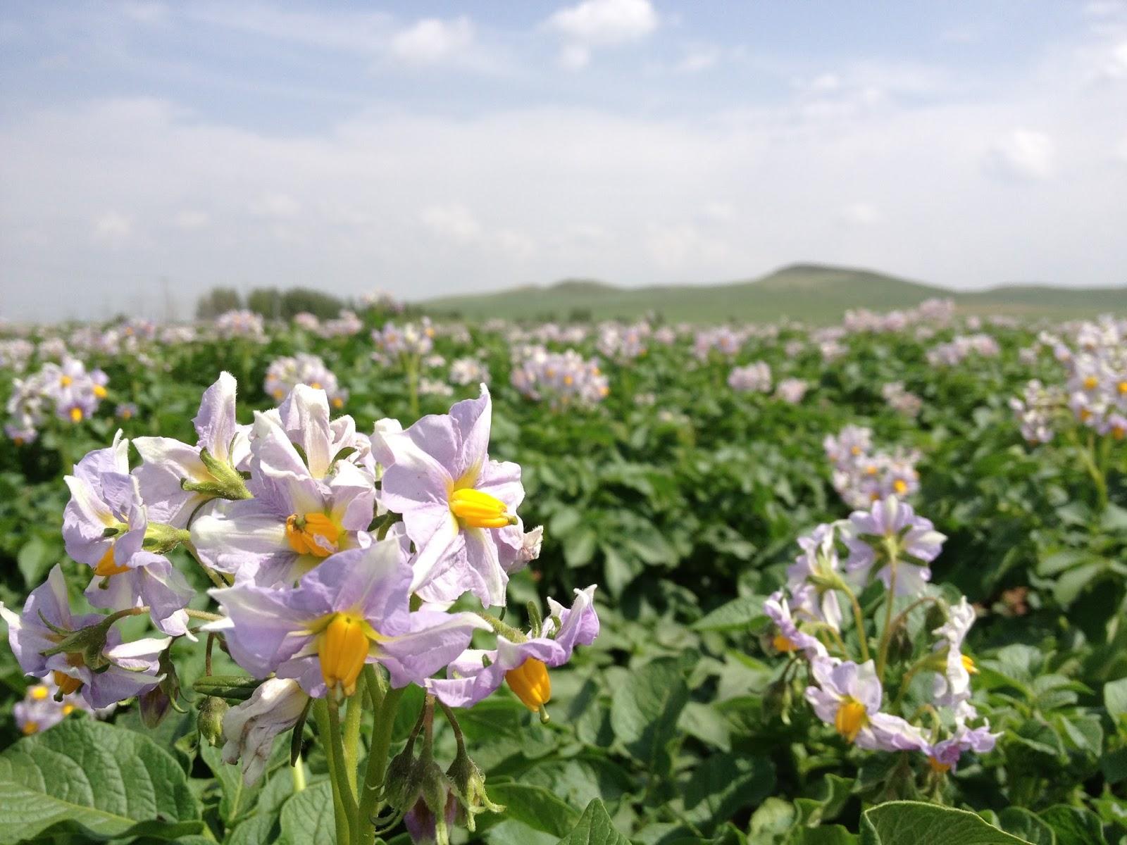 KayLi Lum: On the Road: Inner Mongolia -- Road to inner peace