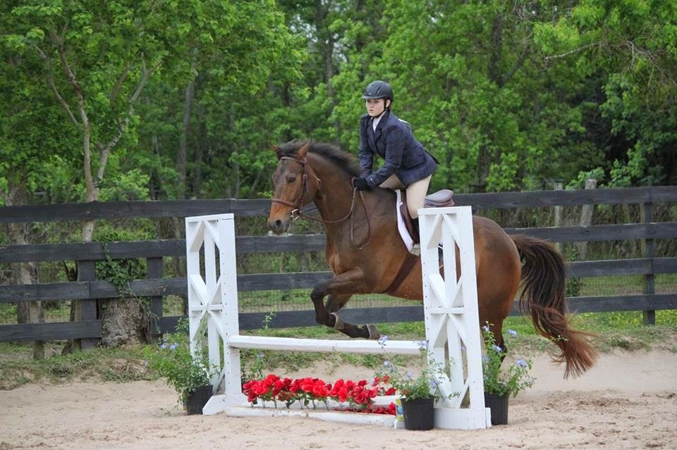 Equitation over fences during horse show