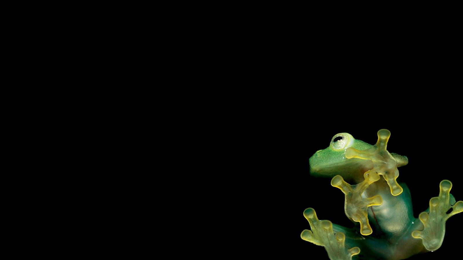 Download free Motorola Shadow frog wallpapers newest Zedge