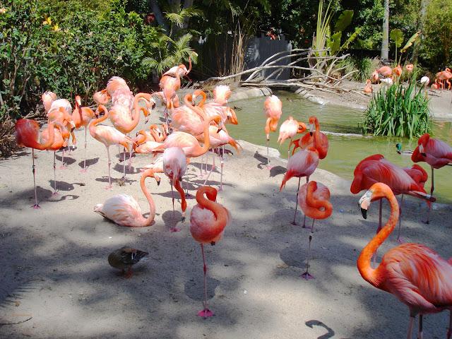 san diego zoo california
