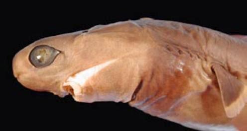 hewan unik yang ada di dasar laut