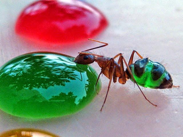 Você sabe oque acontece quando formigas tomam líquidos coloridos?
