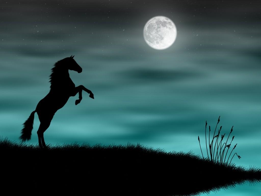 Download Wallpaper Horse Green - Black%2Bwild%2Bhorses%2B%2525284%252529  You Should Have_939781.jpg