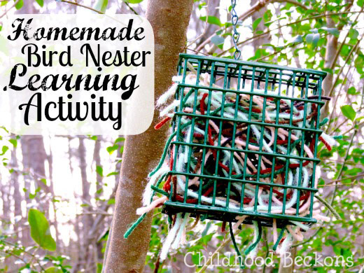 spring time bird nester activity