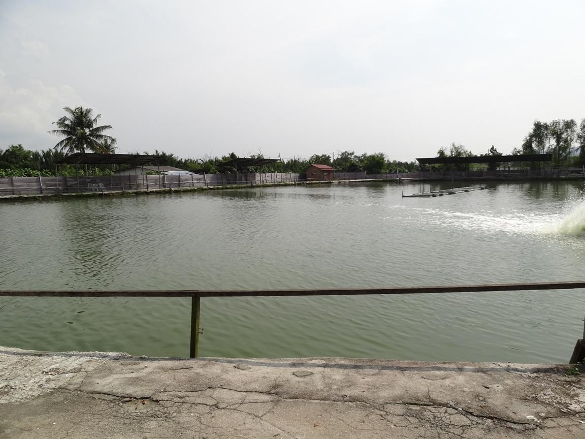 Fishing spots in kuala lumpur selangor ls saltwater for Saltwater fish pond