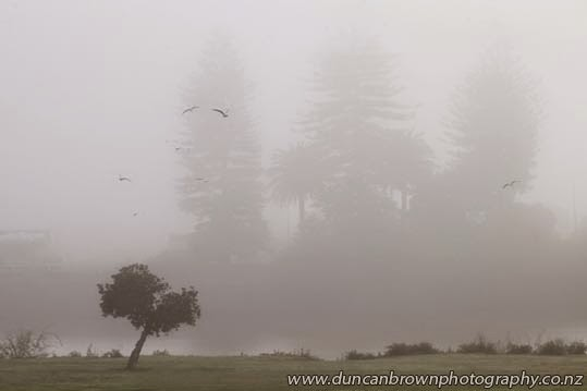 Fog over the Wairoa River photograph