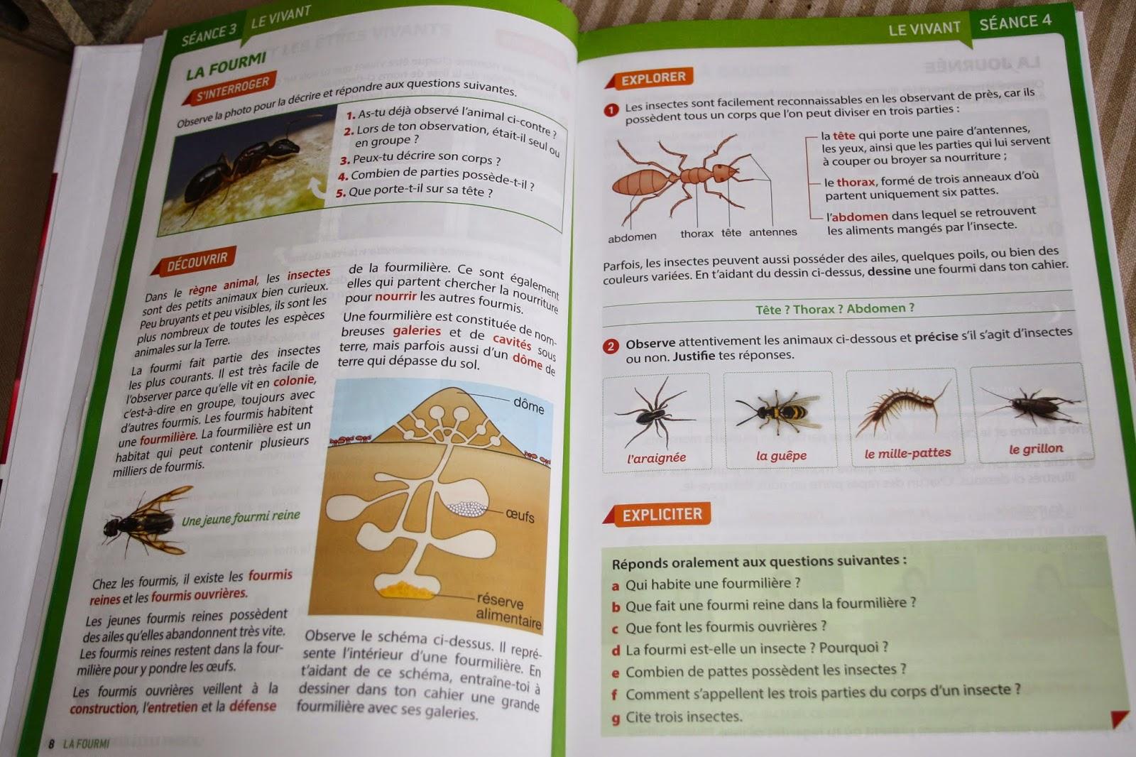 Fourmis dans la maison beautiful de marc de caf dans tous for Astuces contre les fourmis dans la maison