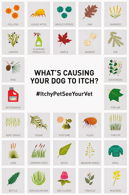common allergens for dogs