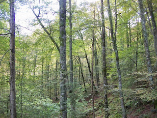 Imagen del bosque por el que discurre la ruta del río Infierno