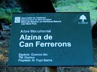 Placa catalogadora de l'alzina de Can Farrerons