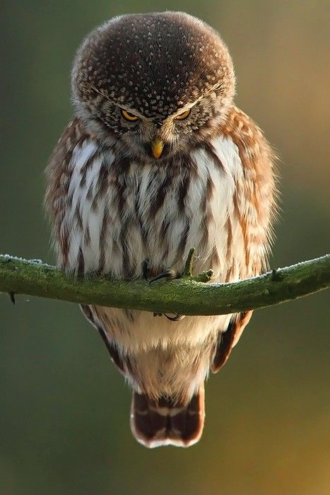 Owl Funny Amp Cute Bird Funny And Cute Animals