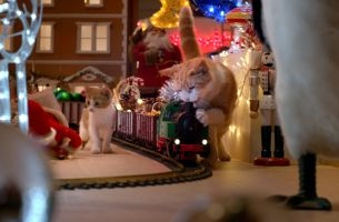 Cats Cause Christmas Chaos In Sweet New Temptations Commercial ...