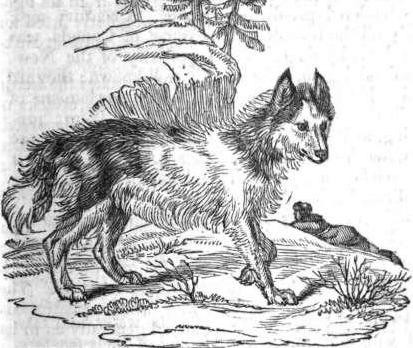 Rotterdam Dog: Extinct Canadian Dog Breeds