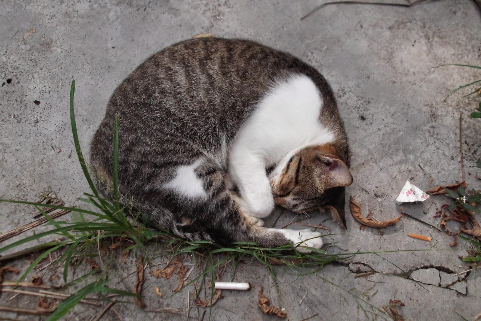 kucing sedang tidur