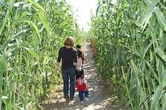 Corn Maze 2011
