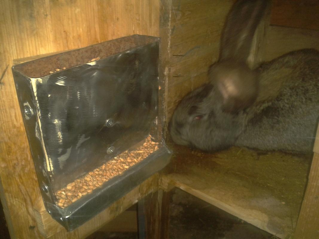 Зерно кормушка для кроликов своими руками