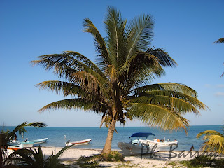 paysages du Mexique Sian Ka'an plage palmiers