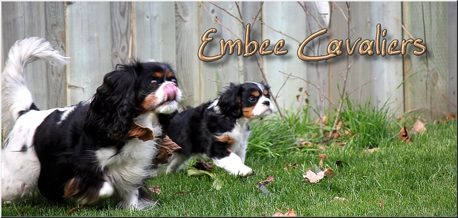 Embee Cavaliers