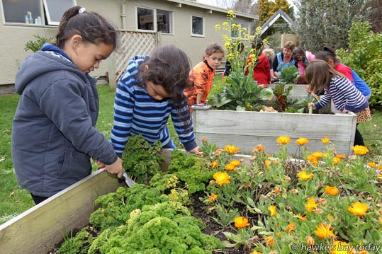 L-R: Marley Moetu, Maika Henare, working in their box gardens at Mayfair Kindergarten, Hastings, which has been awarded Enviro Schools silver status. photograph