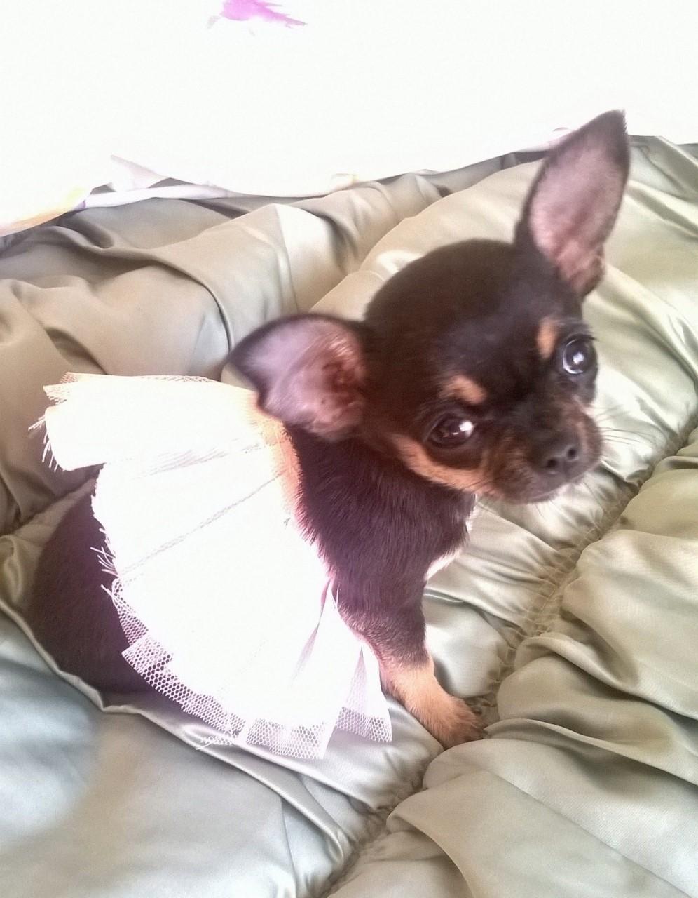 Mi princesa Yarina