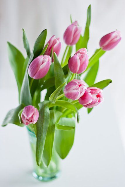 pink tulips in a glass