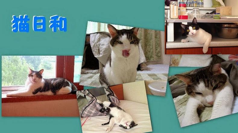 猫日和 ♪ だだっちと外猫と小鳥たち