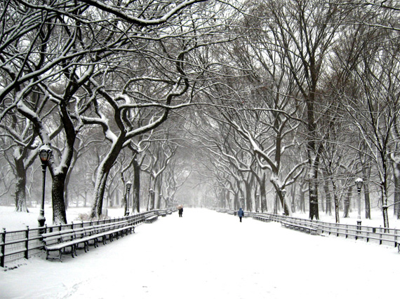 """Central Park"" captured by Lblake919"