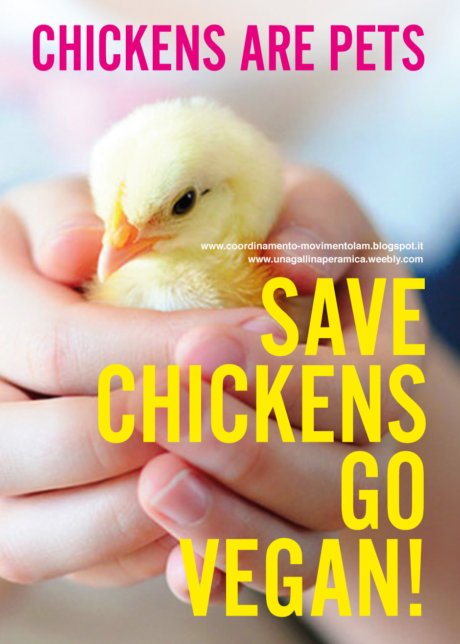 CHICKENS ARE PETS. GO VEGAN!