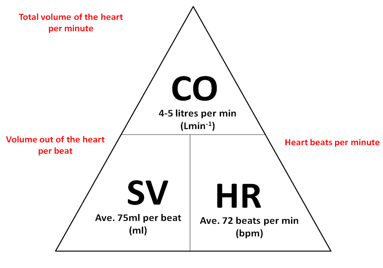 example cardiac cycle question exam 2 Biology 20 review questions these questions are not due, and and you understand the concepts that these questions cover, you will do very well on the exam the questions in italics are probably more important explain the purpose of the valves and describe the part the cardiac cycle when.