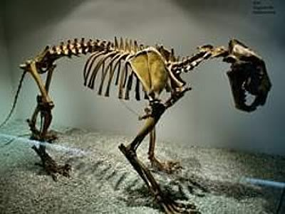 Most Amazing Extinct Land Animals Cave Lion Fossil