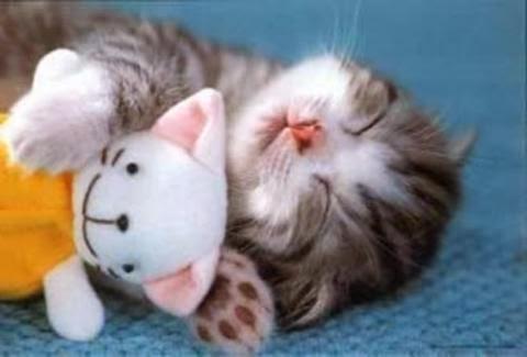 Foto Kucing Lucu Imut dan Menggemaskan 37