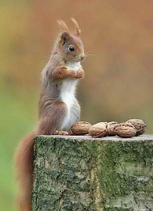 Very Cute Little Squirrels Cars 2015 Pics Hub
