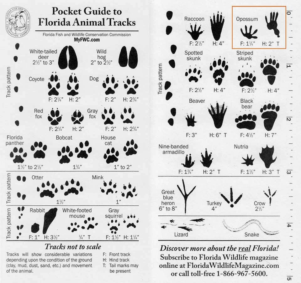 field guide to animal tracks