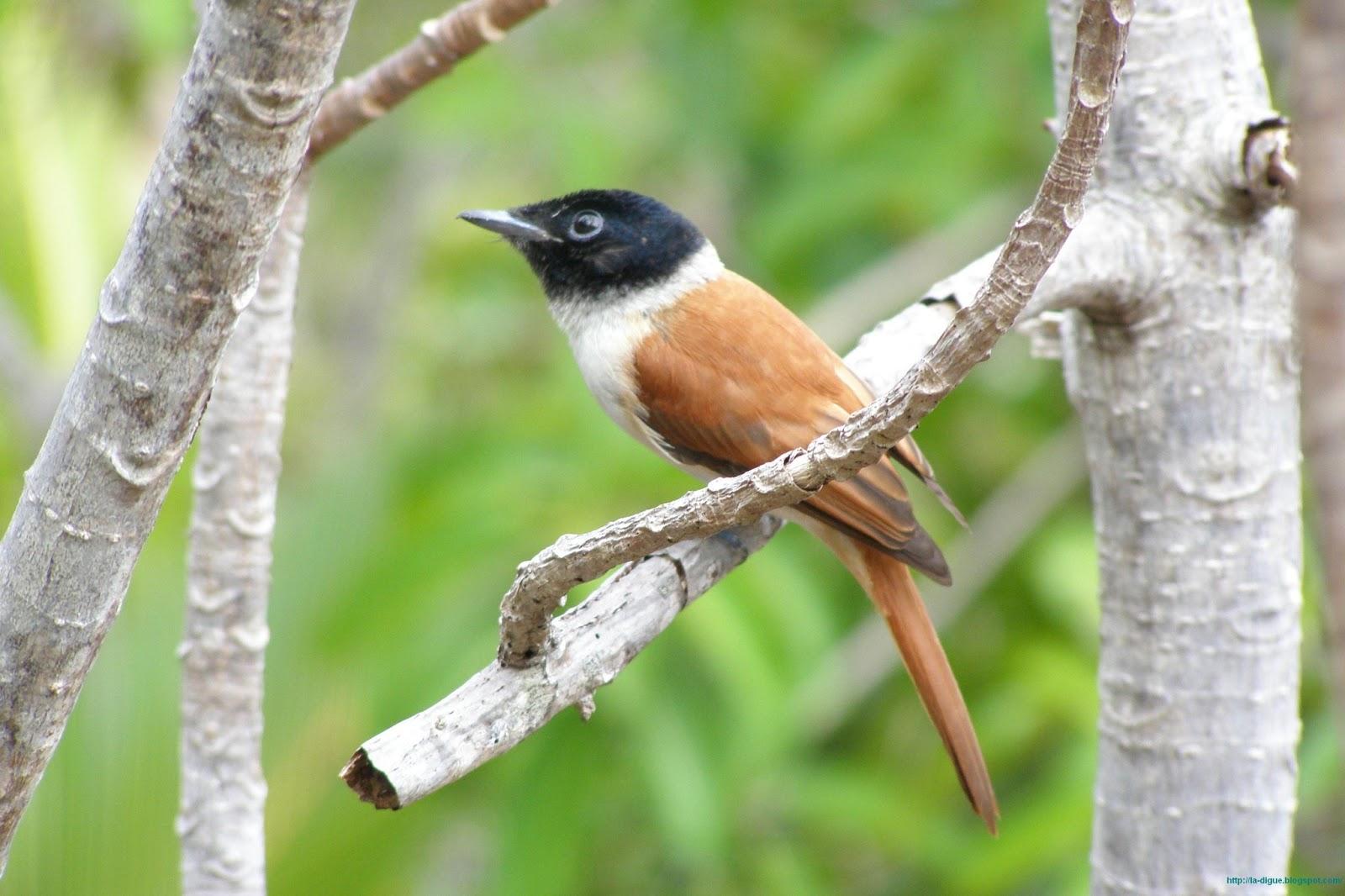 Птицы на острове Ла Диг