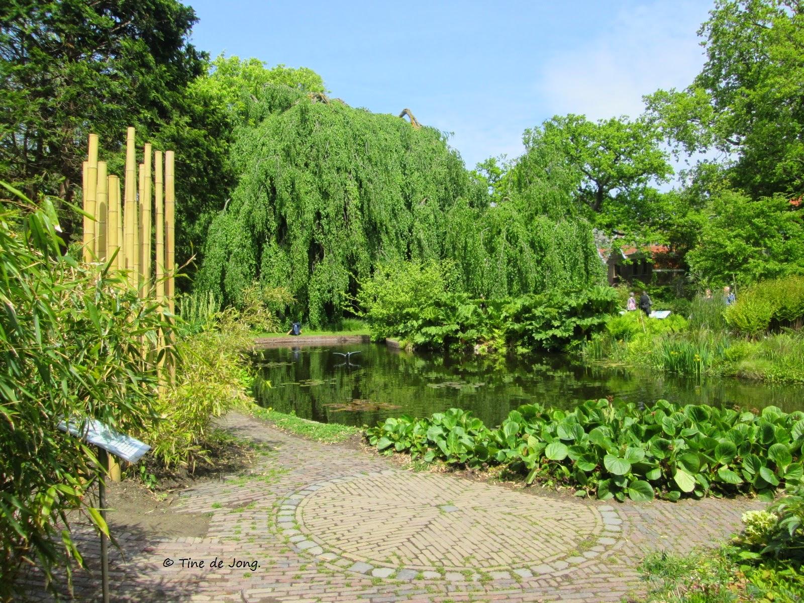 Botanische Tuin Leiden : Leiden bezoek aan de hortus botanicus leiden gedichten en