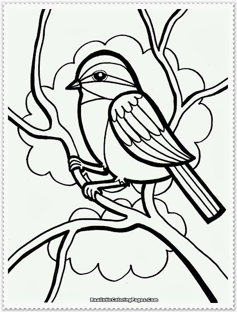 20+ Realistic Bird Coloring Pages Preschoolers Ideas and Designs