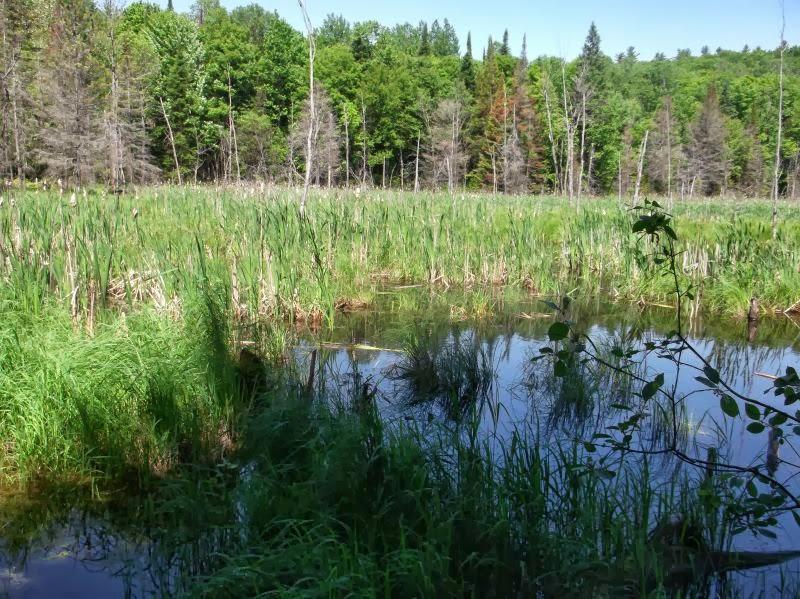 Biodiversité en Outaouais - Découverte Nature