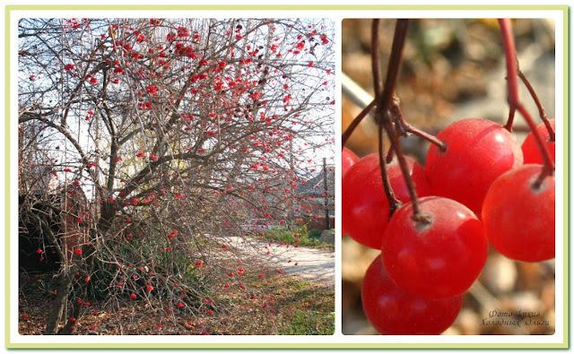 Осенние бусы