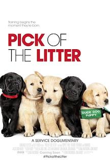 Pick of the Litter Legendado Online