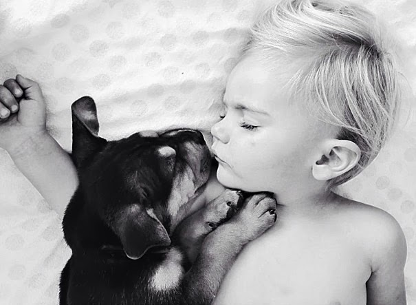 dog and toddler napping together 6
