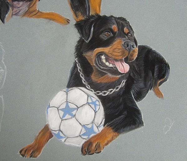peinture rottweiler