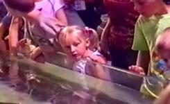 Kids at the Aquarium: Compilation